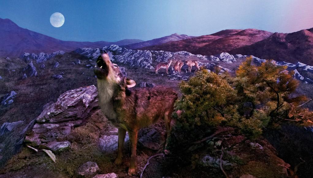 30 Musei dog-friendly in Maremma
