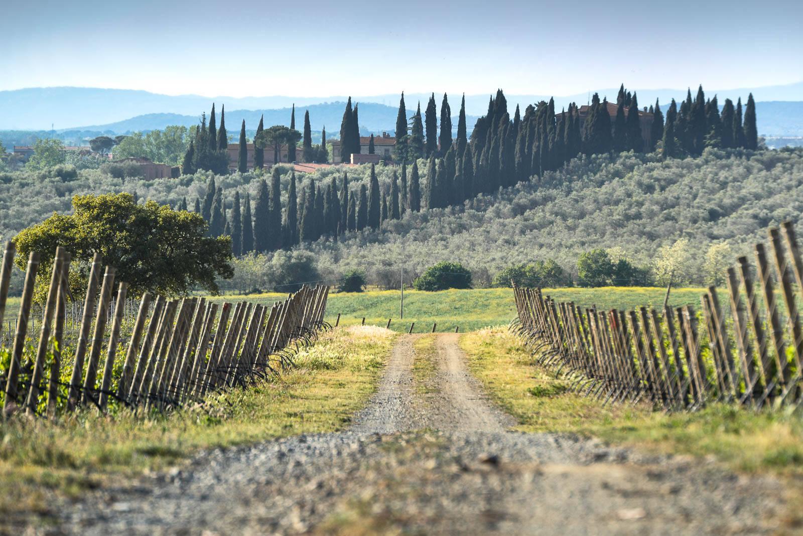 La strada del vino in Maremma